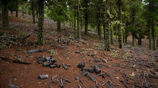 Deforestación entre 2019 y 2020 en Argentina.