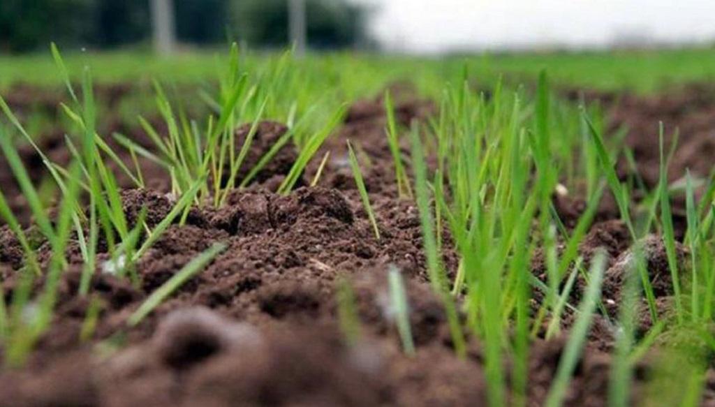 Resultados económicos esperados para la campaña de trigo 2021/2022